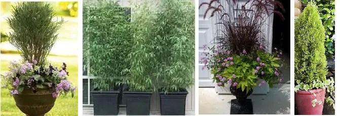 Tall Lattice Planters
