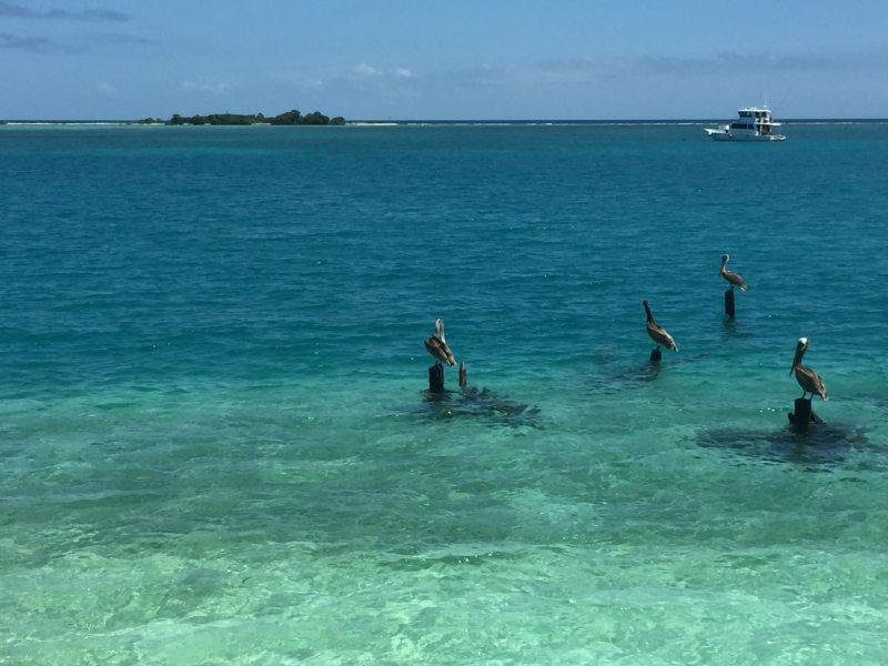 Pelicanos e água transparente do Dry Tortugas. Foto: Enjoy Miami