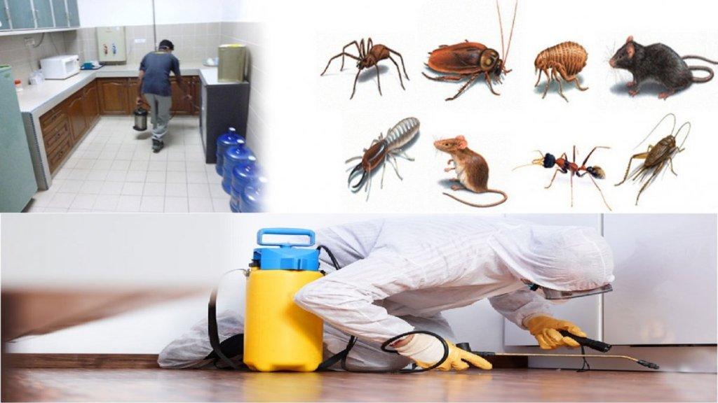 أرقام مكافحة الحشرات بالرياض