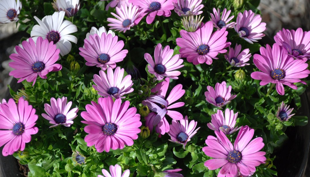 blomster-dugnad
