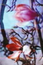 Magnolia middle