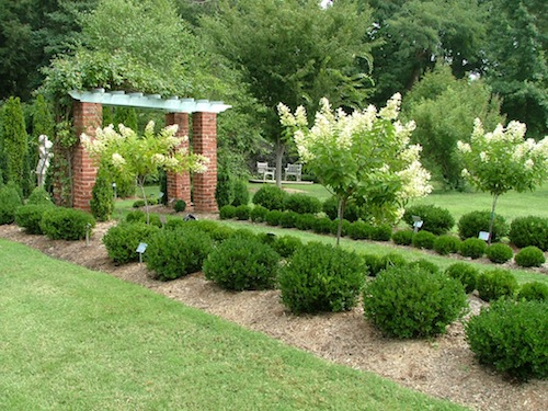 small evergreen shrubs