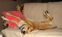 How to Keep Dogs off Furniture: 3 Methods with a Few Easy ...