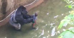 Matan a un gorila para salvar a un niño de 4 años en Cincinatti