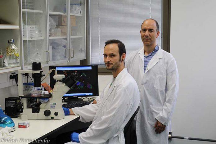 Científicos de la Universidad Hebrea de Jerusalén descubren tratamiento prometedor contra tumores cerebrales agresivos