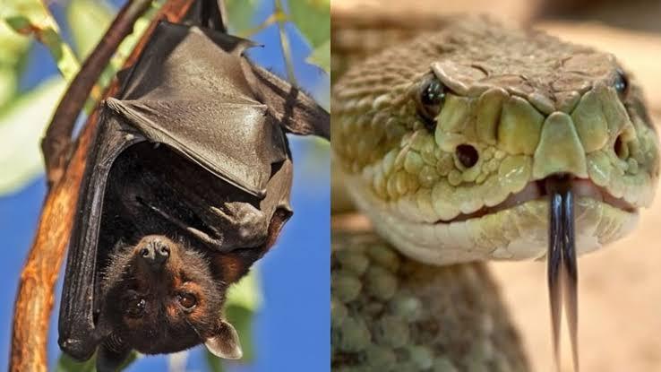 serpiente y murciélago, origen del coronavirus