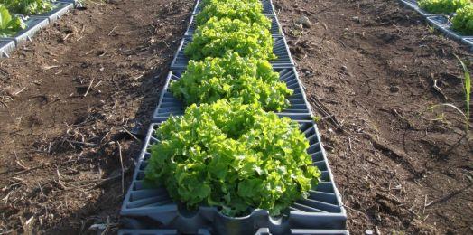 Israel entra en la Organización de las Naciones Unidas para la Alimentación y la Agricultura