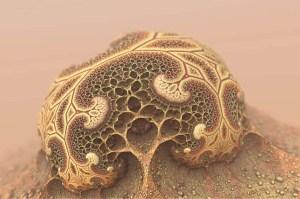 Imagen ilustrativa de hongos