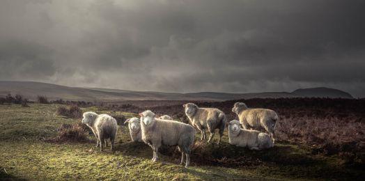 Rabino Yosef Bitton/ Tehilim 23: ¿Por qué le pasan cosas malas a las ovejas buenas?