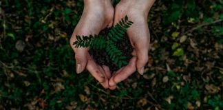 Planta con tierra en medio de un par de manos