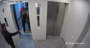 Caballo en un elevador de Tel Aviv