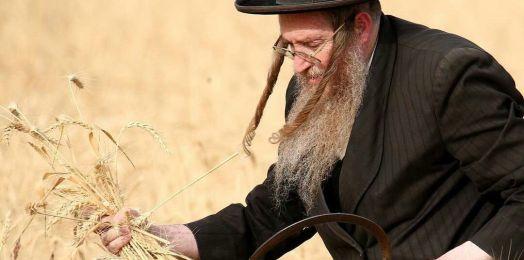 La cuenta del Omer y la entrega de la Torá. Reflexiones rabínicas