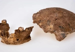 Mandíbula y cráneo de humano prehistórico descubierto en Israel