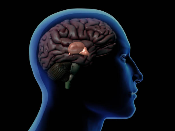 How To Decalcify Pineal Gland?