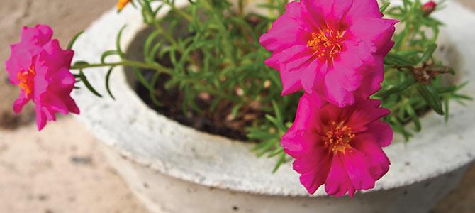 Outdoor Trends-Smaller Flowers