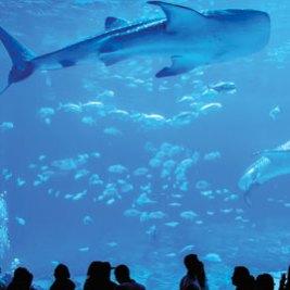 Georgia Aquarium in Atlanta