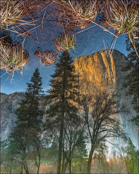 Image: El Capitan reflected in the Merced River, Yosemite Valley, Yosemite National Park, California