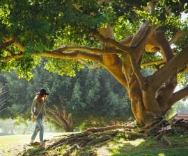 oak-tree-1024