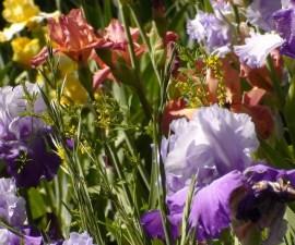 FI Spring garden-455409_1920
