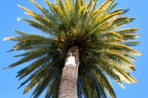Flourish-Like-The Palm