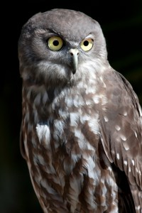The owl as a prophetic symbol