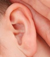 Ear-Crop