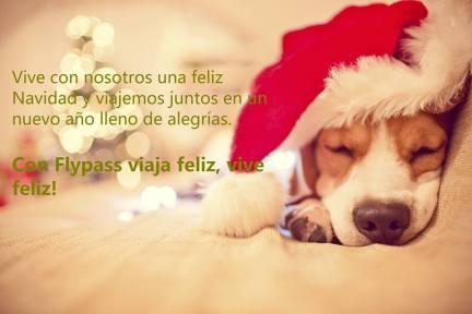 Imagen perro feliz Flypass