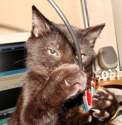 Gato jugando con cables