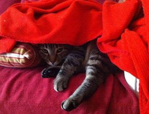 Mi gato Pukah