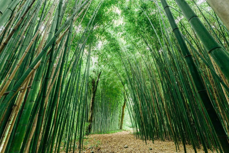 Château de Laàs bambouseraie jardin