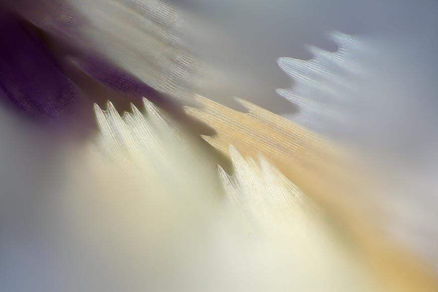 Les Ailes de Papillon vues sous Les Ailes de Papillon vues sous microscope