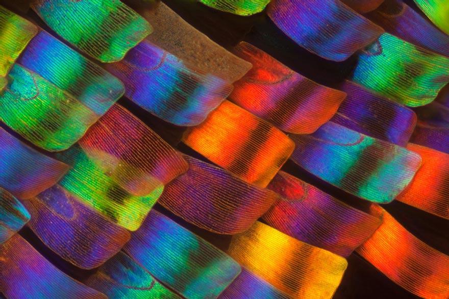 Les Ailes de Papillon vues sous microscope