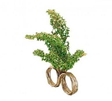 alice-anneaux