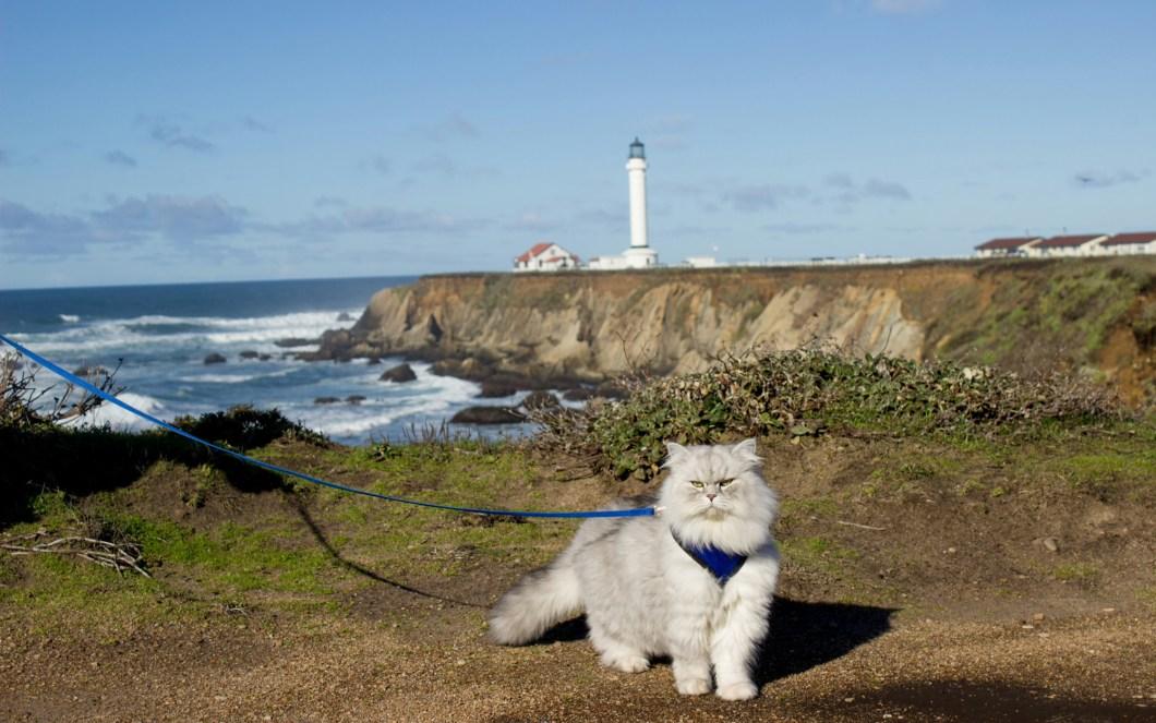 Lighthouse-Cats-voyager avec un chat