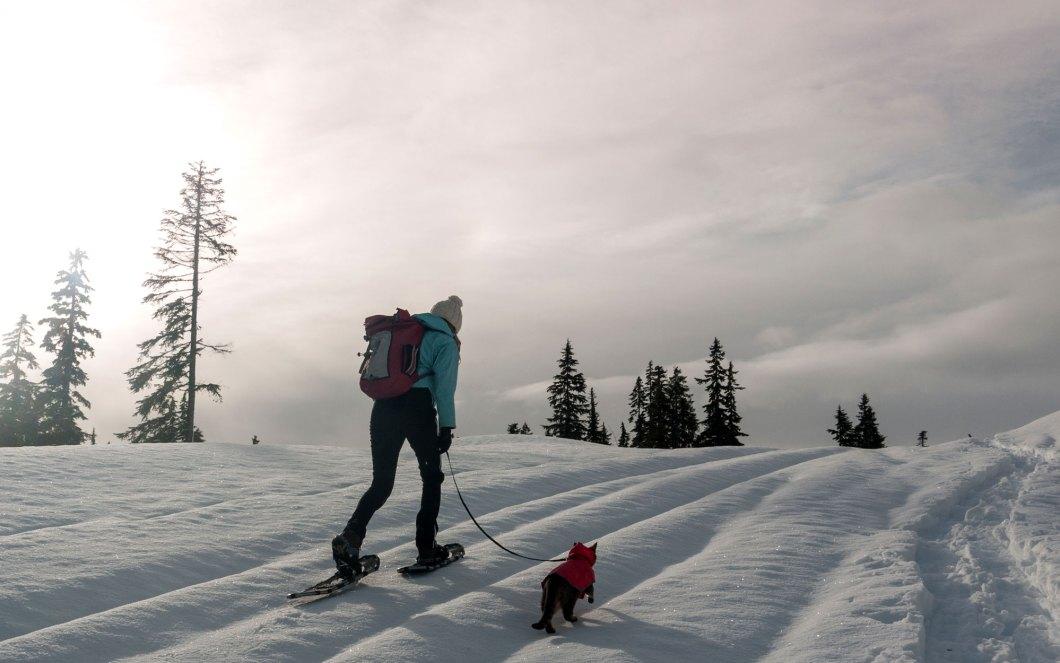 Snow-Hike-Cats-voyager avec un chat