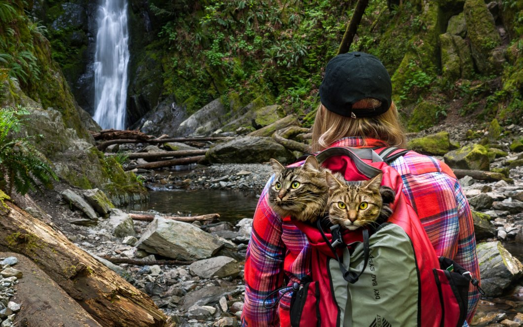 Waterfall-Hike-Cats-voyager avec un chat