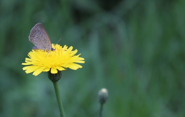 A small butterfly on a yellow flower.