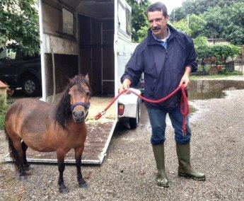 NS pony CASTAGNA con Riva-2
