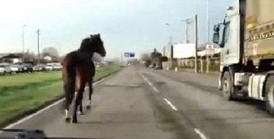 cavallo-ns-4