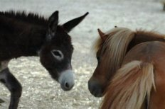 asino e pony-NS_9064