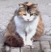 ns-gatto peloso