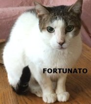 FORTUNATO_NS