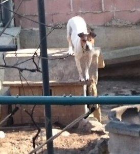 NS-cane Lola cortile