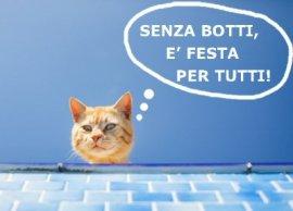 NS-gatto_campagna Besana