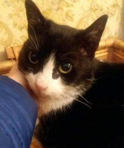 NS-gatto Felix 1