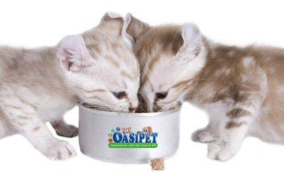 gattini oasi pet-dettaglio-NS