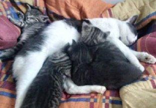 mamma e gattini-NS-0009