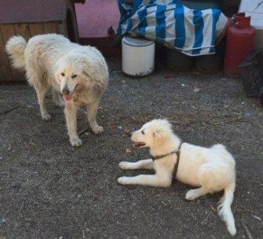Belle con cucciolo-NS-095074