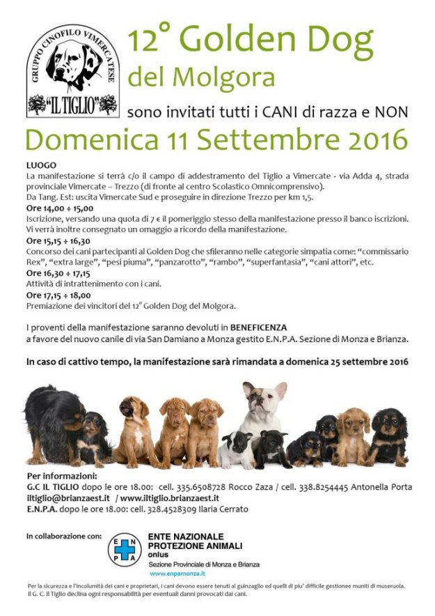 OK_home page_volantino golden dog 2016
