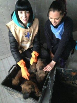 ns-volontarie-con-cuccioli-contenitori_0832